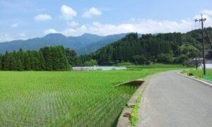 【経験談】新卒で創業1年目の熊本の地元企業に就職した話