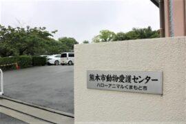 熊本市動物愛護センターを取材|コロナ禍のペットブーム、本当にあなたは責任持てる?